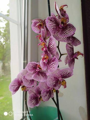 Орхидеи разных сортов