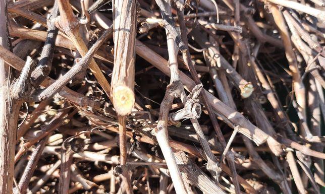 Веточки ветки винограда корм погрызушки животным грызунам