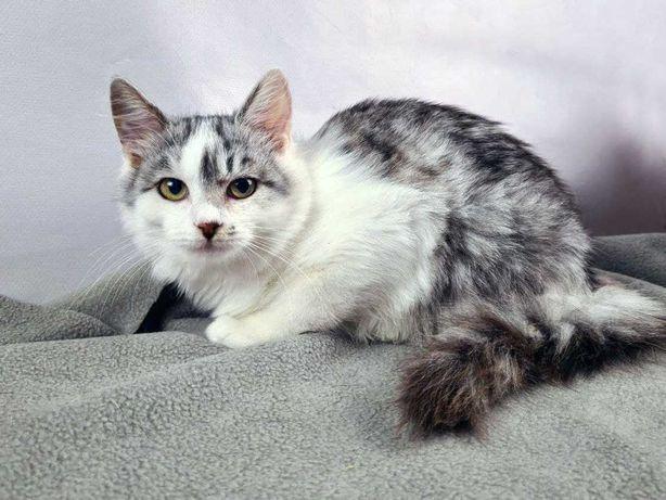 Милый котенок Изуми, кошка 3 мес, ищет дом
