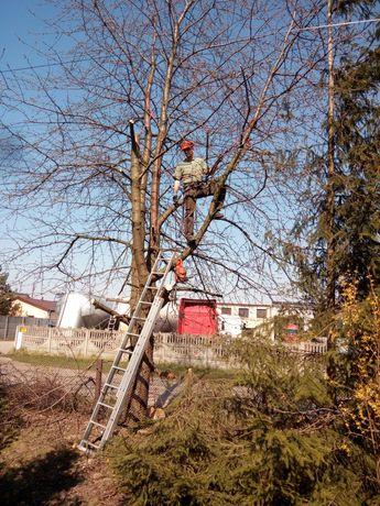Wycinanie, pielęgnowanie drzew