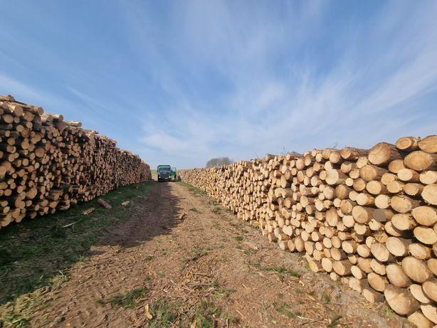 Skup drewna dłużyca, kłoda, papierówka.Możliwy zakup drewna na pniu.