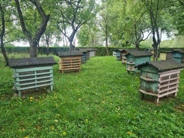 Pszczoły  z ulami