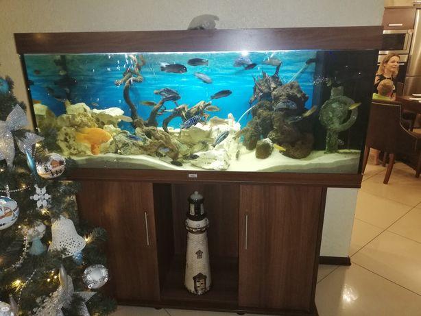 Akwarium z rybkami 450 litrów