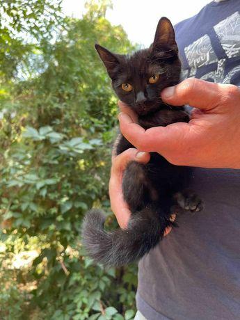 Отдам чёрного котенка ,девочка , 3 месяца