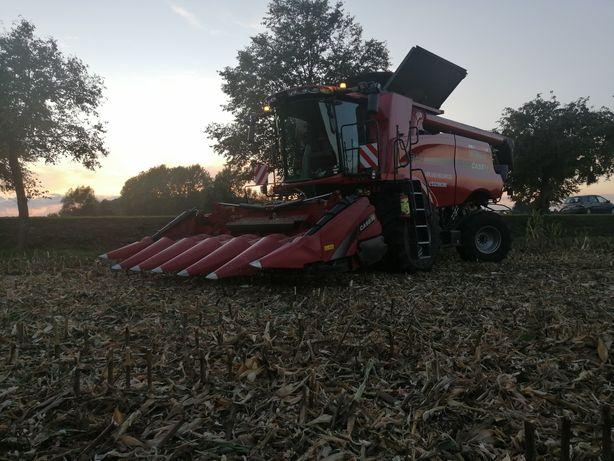 Koszenie, zbiór rzepaku zbóż i kukurydzy