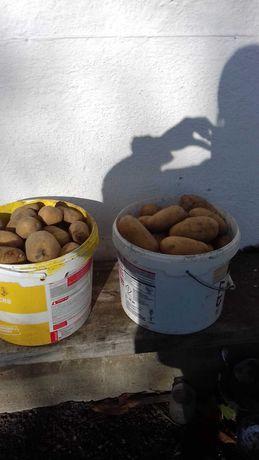Продам картоплю, сорт тріумф