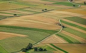 Grunty rolne orne ziemia rolna orna nieużytki wydzierżawię uprawię