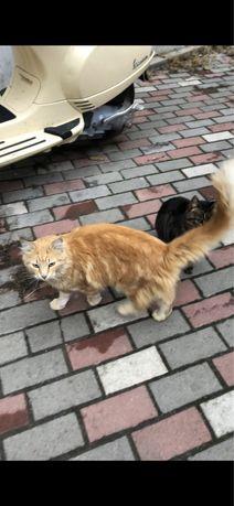 Пропал рыжий кот Одесса Люстдорфская догога 103