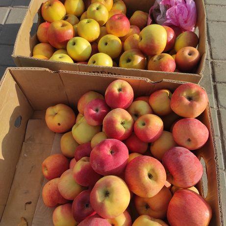 Яблука смачні соковиті