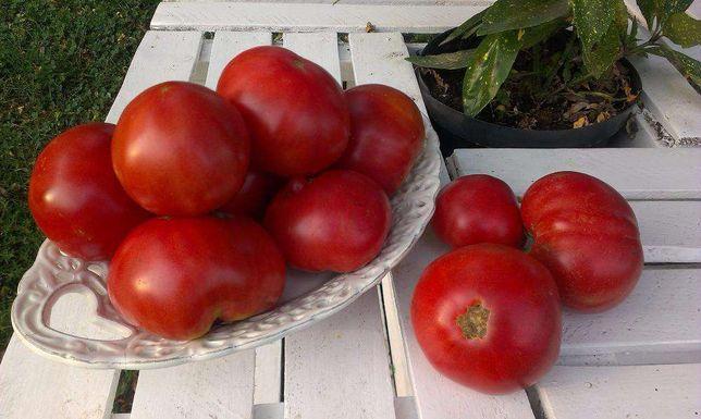 Goliath - Pomidory - Nasiona odporne na choroby