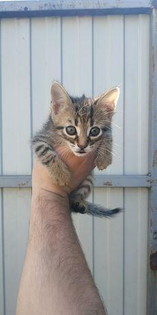 Котята,в хорошие руки