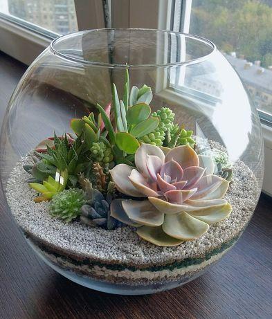 Флорариум с композицией из суккулентных растений в стеклянном шаре.