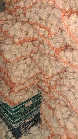 Ziemniaki jadalne ekologiczne na obirniku wineta