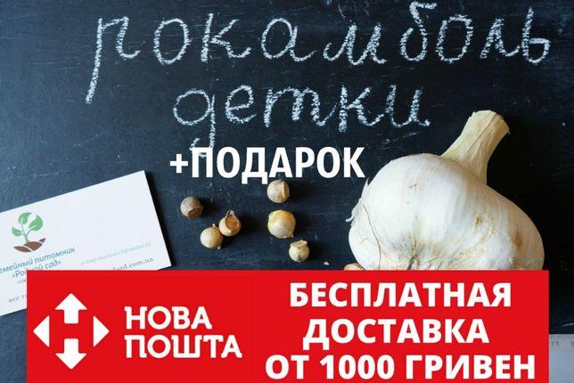 Рокамболь детки семена 20 штук(слоновий гигантский лук-чеснок)+подарок
