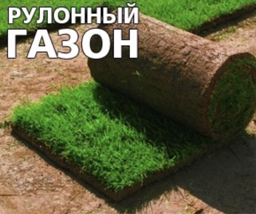 Озеленение. Благоустройство.Рулонный газон.