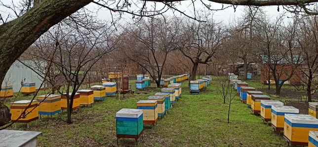 Пчелопакеты и пчелосемьи с ульями
