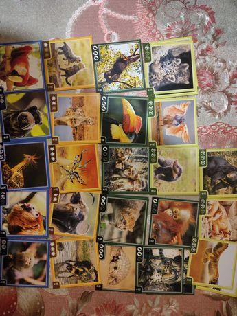 Картки Варус Звірокуб