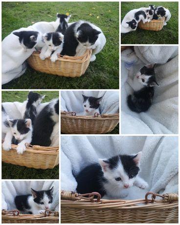 Kotki do wydania