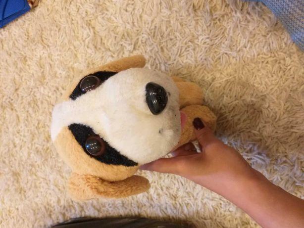 Собака іграшковий