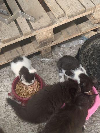 PILNIE kociaki szukaja domu