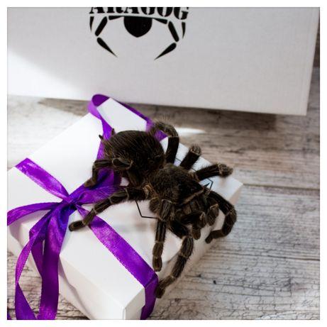 паук птицеед новичку - супер неприхотливое животное павук тарантул