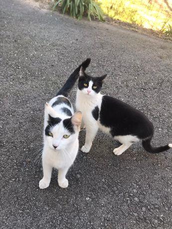 Gatinhos disponiveis para adoção
