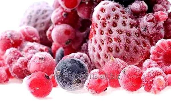 Зберігання полуниці,малини, охолодження зберігання, камера морозильник