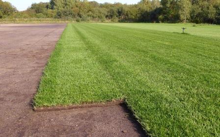 Trawa rolowana/ trawnik w rolce/trawniki