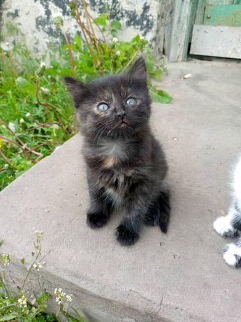 Котенок  кошка  кошечка