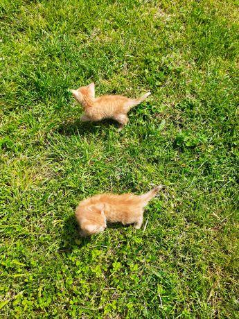 Wybierz mnie -cudowne małe kotki tylko w dobre ręce- zobacz!