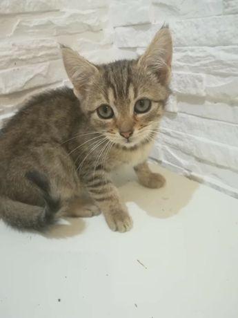 """Śliczne kotki do adopcji """"nie ma juz rudego"""""""