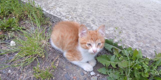 Рижик котик миленький