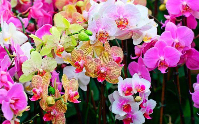 Орхидеи, разные, породистые