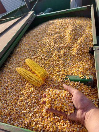 Продам кукурудзу урожай 2021р
