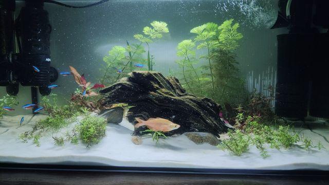 Akwarium Aquael leddy 60 54L cały zestaw z obsadą filtry grzałki timer