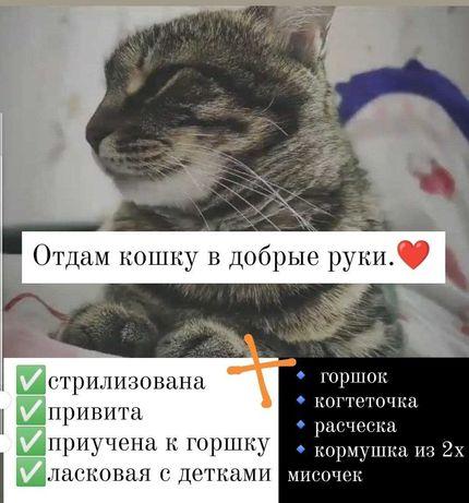 отдам / подарю кошку