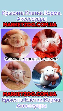 Крысы,крыски,крысята дамбо