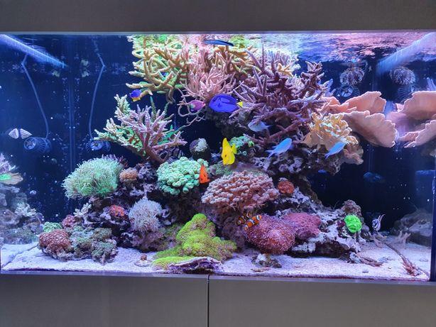Akwarium morskie z życiem i całym wyposażeniem