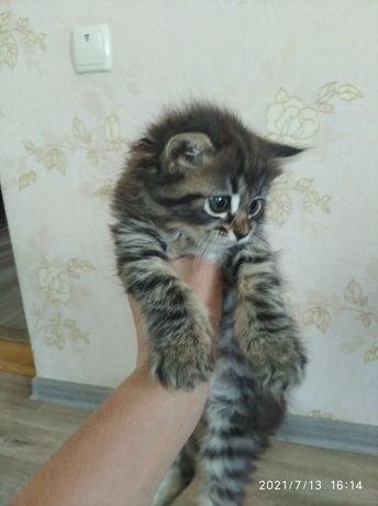 Отдам котёнка девочка