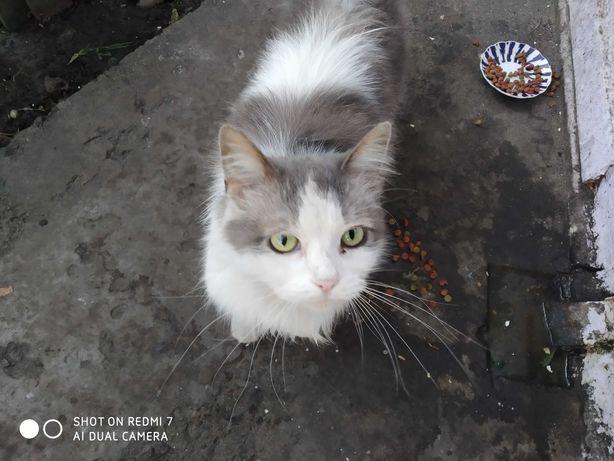 Найдена молодая кошка. Хозяева выставили из дома