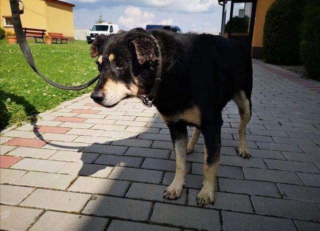 Borys to spokojny i zrównoważony pies,chętnie przyjmie pieszczoty ale