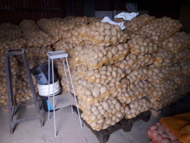 ziemniaki jadalne Vineta z dowozem do odbiorcy.