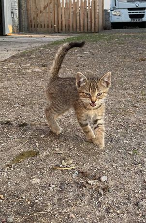 Oddam kotki, są samodzielne.