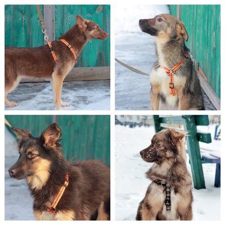 Бесплатно: щеночки от некрупной собачки, 6 мес , девочки, мальчики