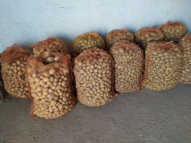 Ziemniaki odpadowe