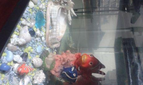 Aquarios para peixes com tampa iluminação