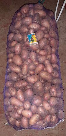 Продам посевной картофель сорт Словянка !!!