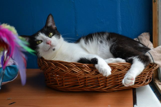 чорно-біла кішечка красотушка 1р