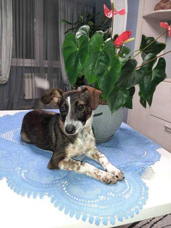 Красавец-щенок, оригинальный окрас