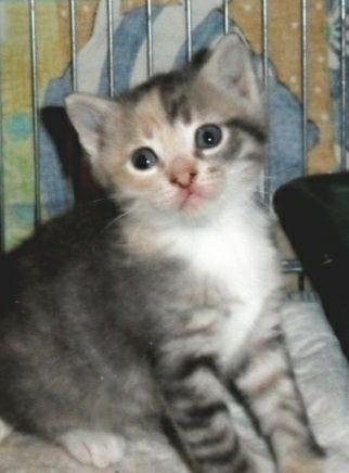 Красивый котенок ищет дом
